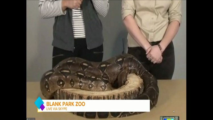 BEYOND LIVE: Jersey the Big Boa & Valentine's Weekend Activities at Blank Park Zoo