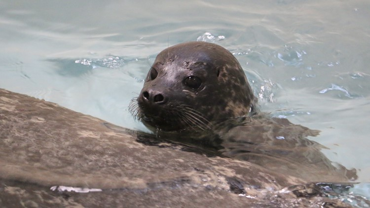 Blank Park Zoo reveals name for seal pup