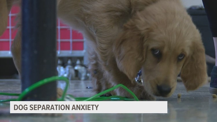 Returning to work? Here's how to reduce pet separation anxiety