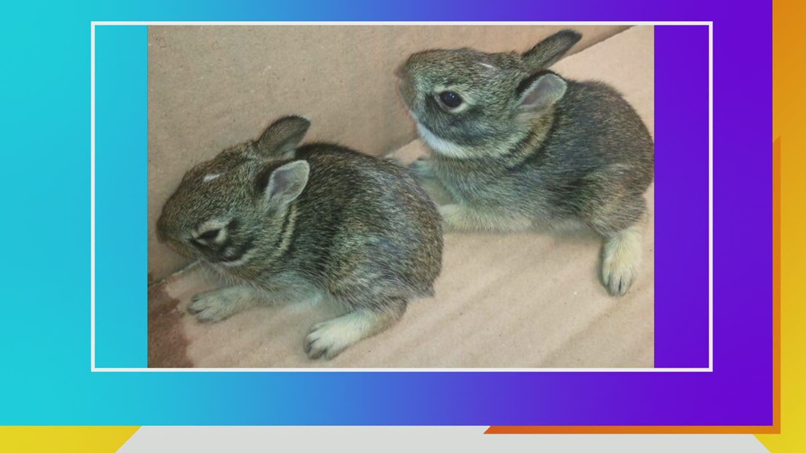 What to do if you discover baby bunnies in your yard