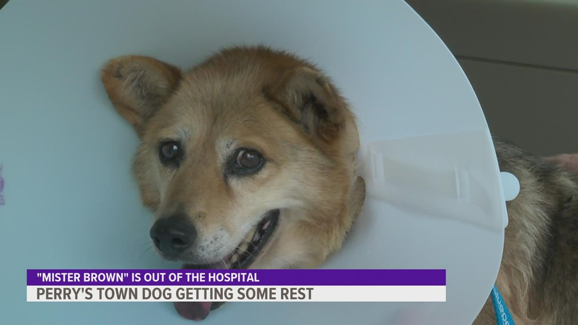 Dog rescued after wandering the streets of Perry for 13 years