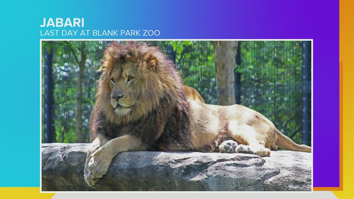 Jabari the Lion's final day at the Blank Park Zoo