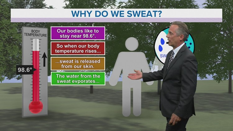 Local 5 Weather Lab | Why we sweat
