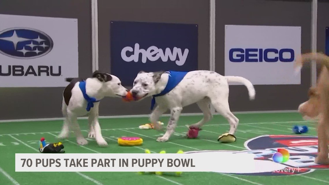 Looking ahead to the 2021 Puppy Bowl