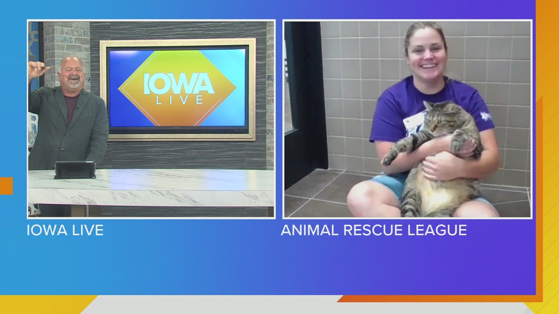 Nilla the cat, Father's Day Gift Ideas, Yappy Hour & ONLINE portion of Raise Your Paw Auction