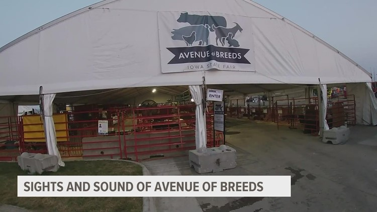 Horses, cattle, chickens and more: FFA students care for variety of animals at the state fair's 'Avenue of Breeds'