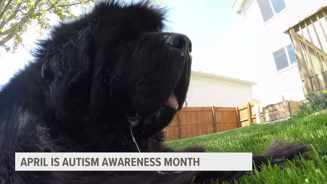 Service dog Boba sharing love and acceptance for autism