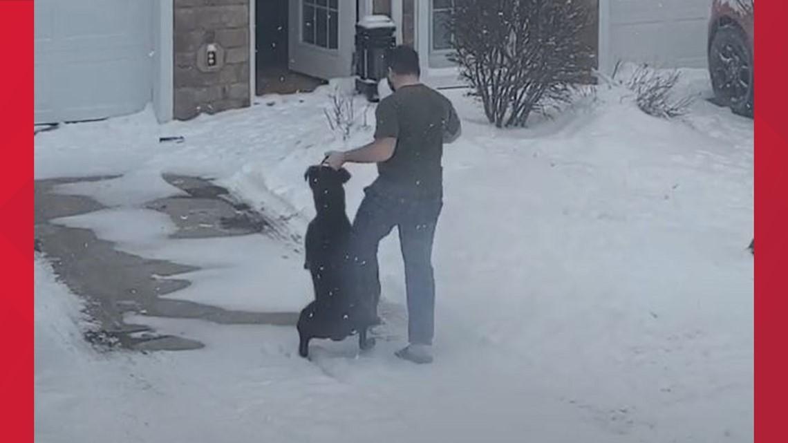 Waukee man agrees to surrender custody of Echo the dog