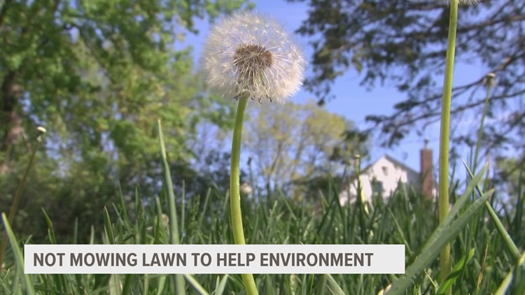 'No Mow May': How cutting back on mowing the lawn can help the environment