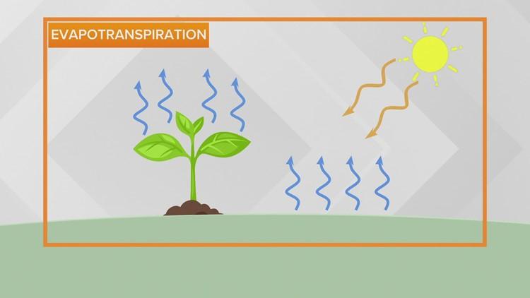 WEATHER LAB | Dew point vs relative humidity