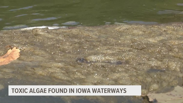 Potentially toxic algae in Saylorville Lake threatens Des Moines's drinking water supply