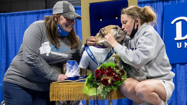 Rescue dog wins 2021 Most Beautiful Bulldog Contest