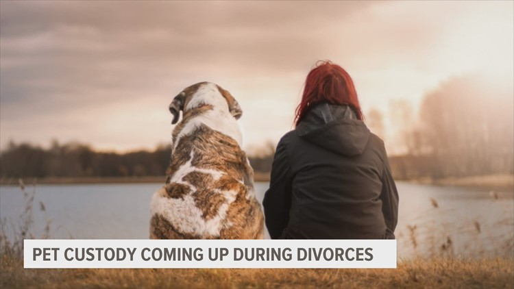 When it comes to heated divorce, pets aren't people too