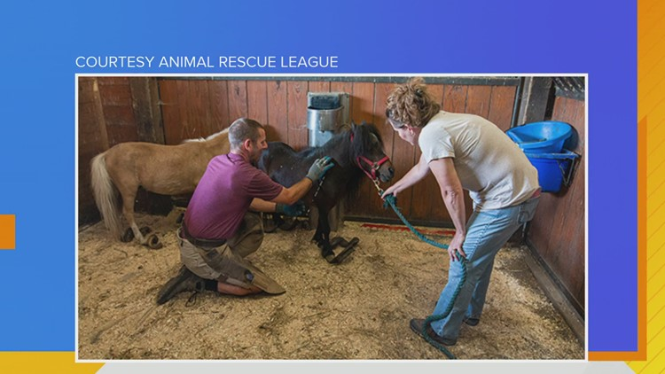 ARL Update on the 14 Miniature Horses recently rescued, dogs in hot cars & Corgi Chase