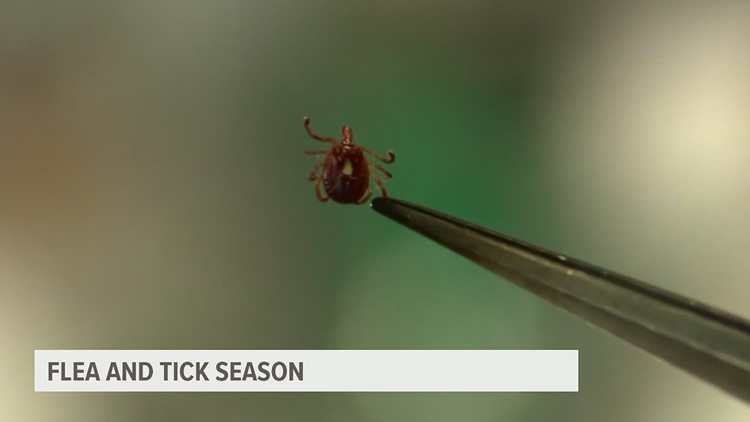 Dr. Bill Lewis on how to protect your pets from fleas and ticks