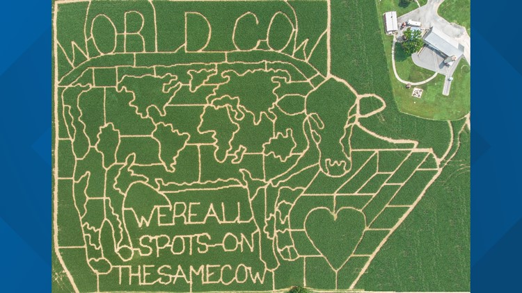 Generating positive energy into Lititz: World Cow corn maze celebrating love this Labor Day