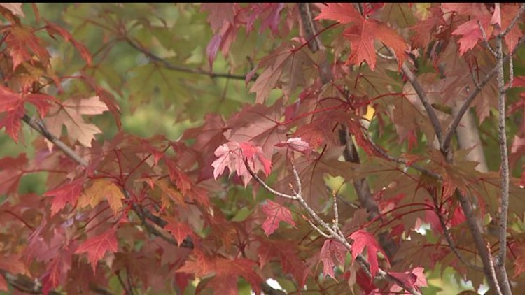 Leaf peeping season about to begin; here's how to see the best colors this year