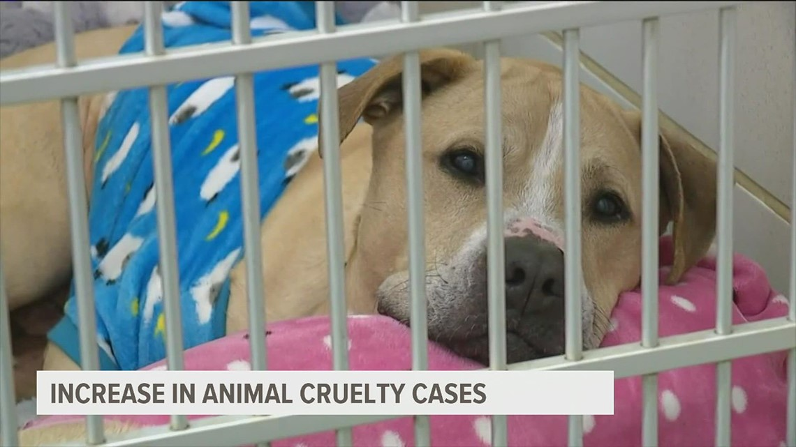 The number of animal abuse investigations has increased in York County