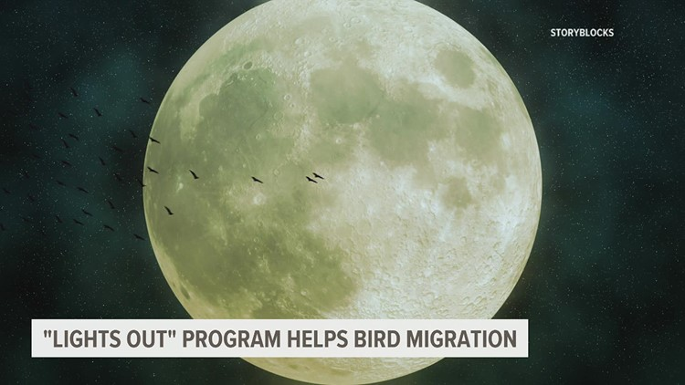 'Lights Out' initiative aims to reduce light pollution, streamline bird migration