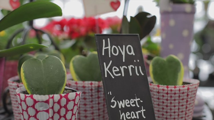Heart-shaped succulents for Valentine's Day