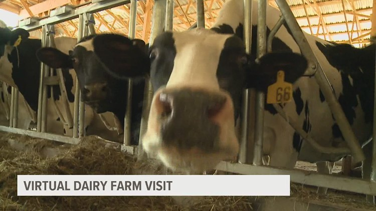 Local dairy farm offers virtual tours for kids