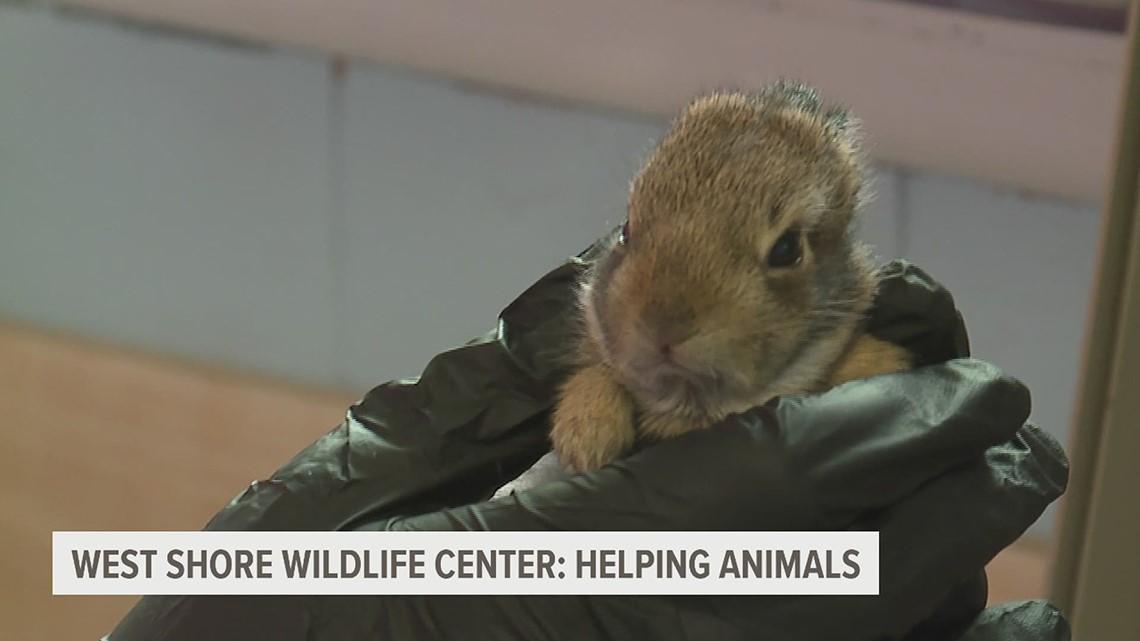 Helping Animals: West Shore Wildlife Center