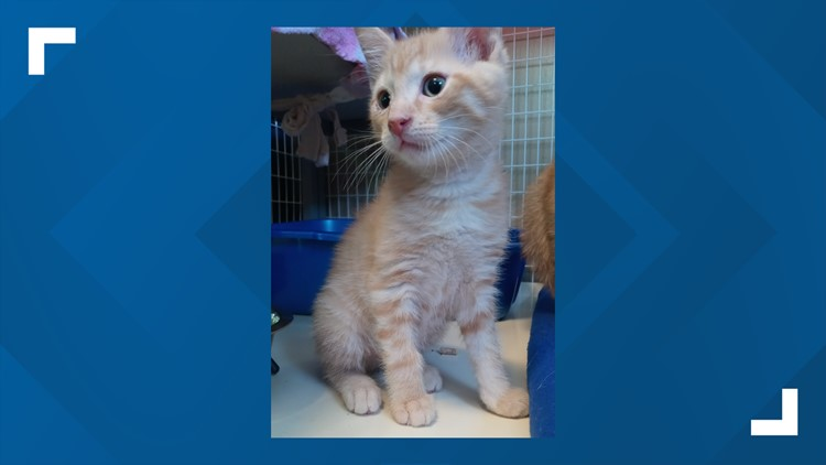 Furry Friends with four York City kittens