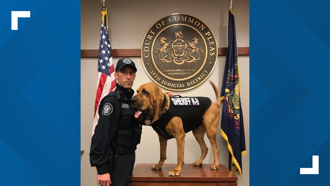 Prince, a K9 officer with the York County Sheriff's Office, receives bullet- and stab-protective vest thanks to charitable donation