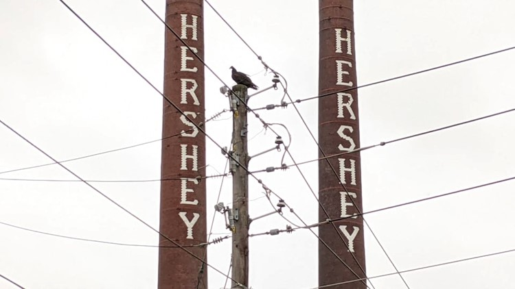 Black vultures are descending on Hershey. Residents want them gone.