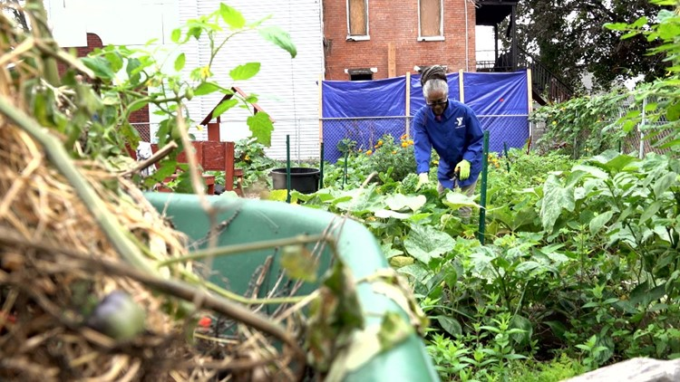 Harrisburg community garden teaches children about urban agriculture, nutrition   Family First with FOX43