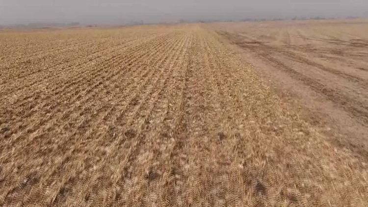 The affects of the derecho are still being seen as farms are in the thick of harvest season