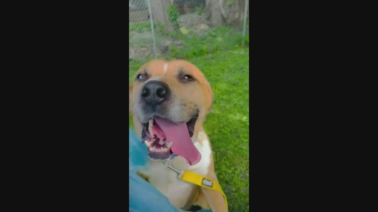 Pet of the Week: Beaver the Dog