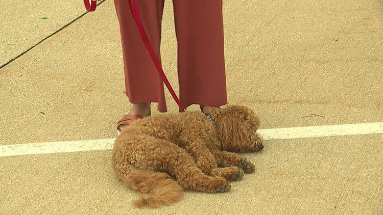 Cooper, First Therapy Dog in Moline-Coal Valley School District, Makes His Live Television Debut