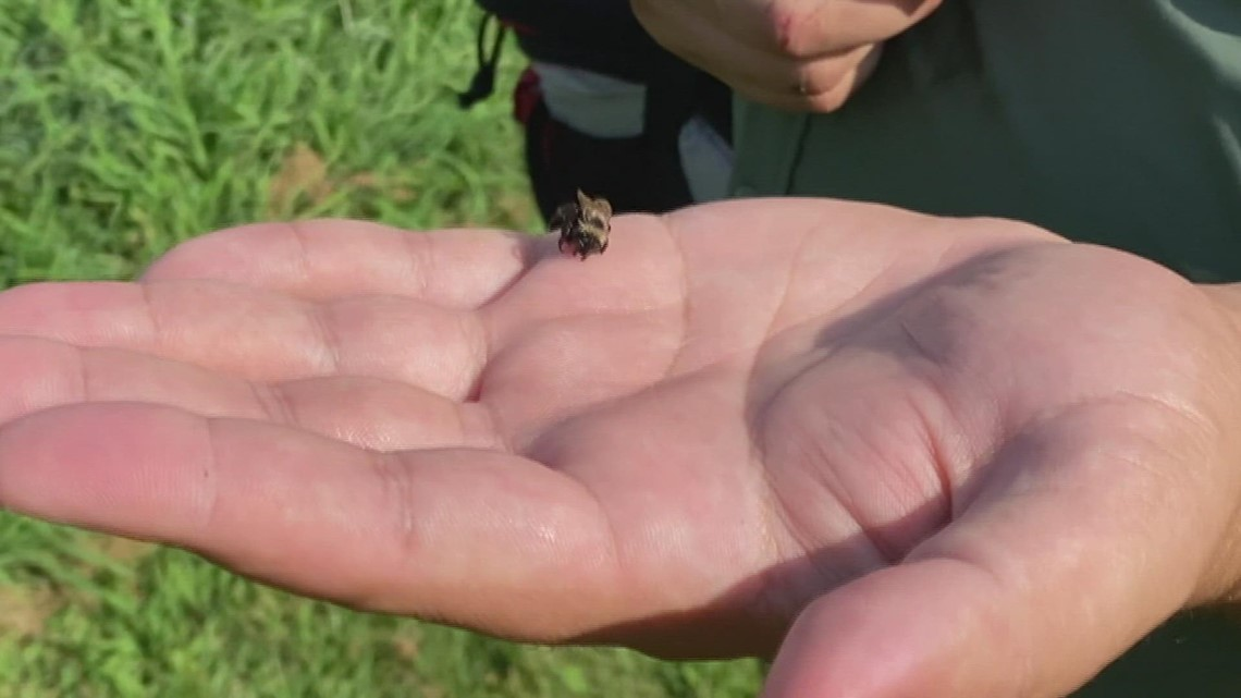 Niabi Zoo gives new life to endangered bumble bee population
