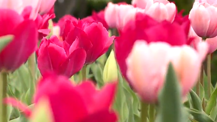 Moms get into QC Botanical Center free on Mother's Day