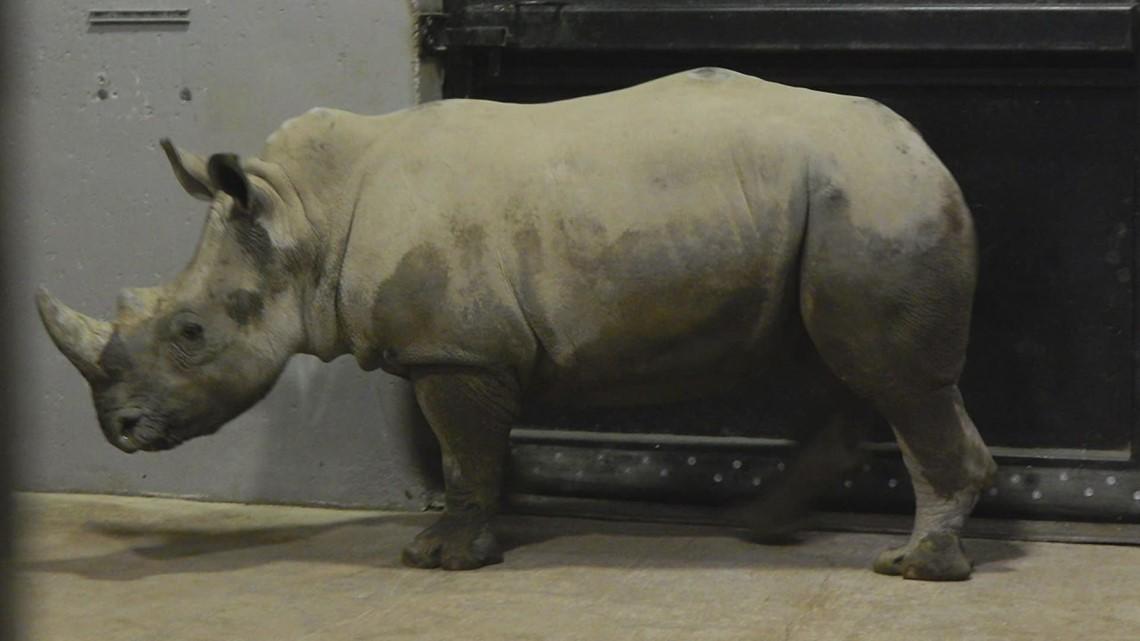 Niabi Zoo welcomes first rhino