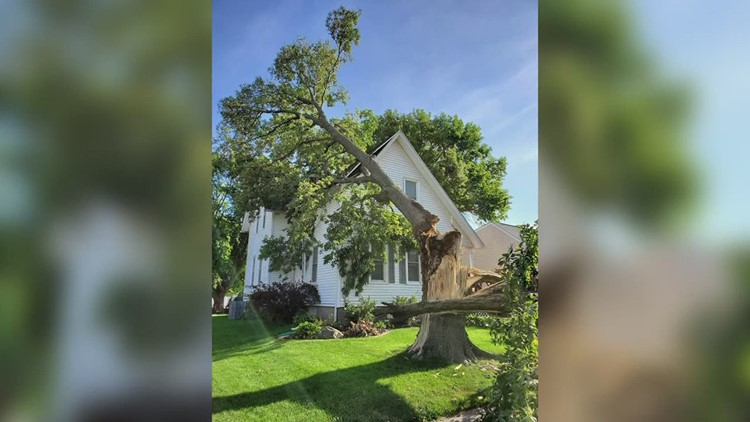 How to protect your health (and your wallet) when a storm knocks down a tree