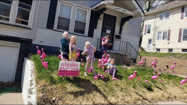 A girl scout troop is behind several yards full of pink flamingos