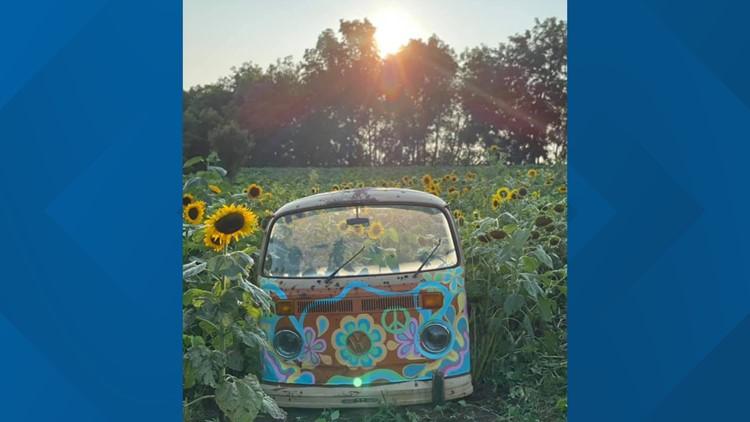 Straddle Creek Gardens reopens Sunflower Maze Saturday