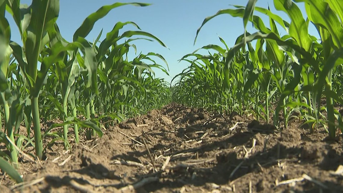Drought conditions inching closer to the Quad Cities