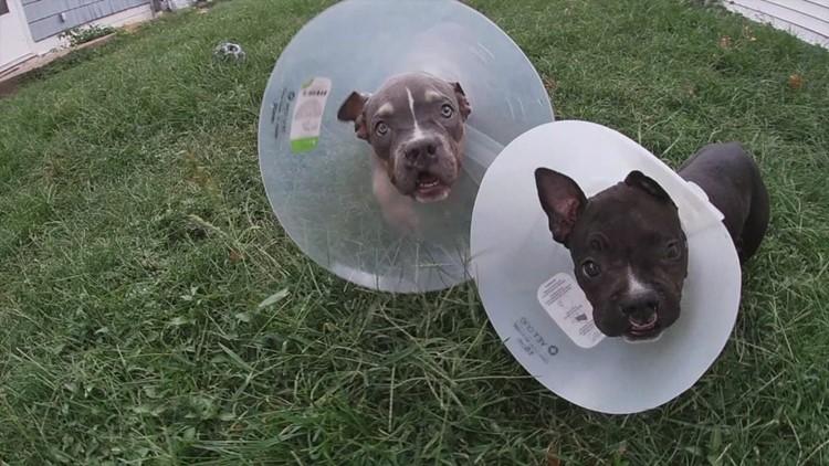 Dog breeding warning