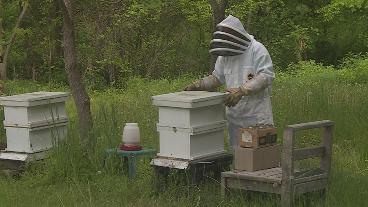 75-year-old Geneseo man turned his later-in-life passion for bees into a honey business