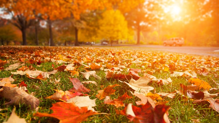 Before it fades: Where, when to catch a glimpse of fall foliage in QC