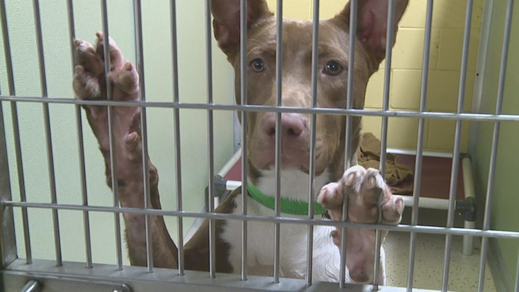 Rescue animals from Louisiana available for adoption at King's Harvest this week