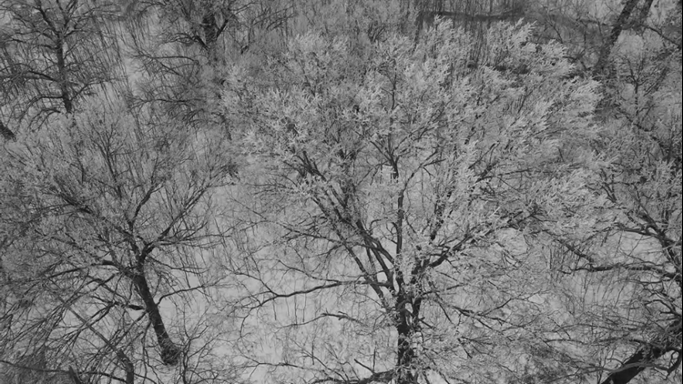 Watch: News 8 drone flies over ice-covered trees on Credit Island