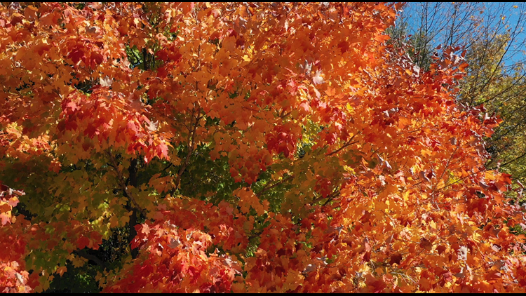 Watch: Beautiful fall colors from the News 8 drone above Loud Thunder Forest Preserve