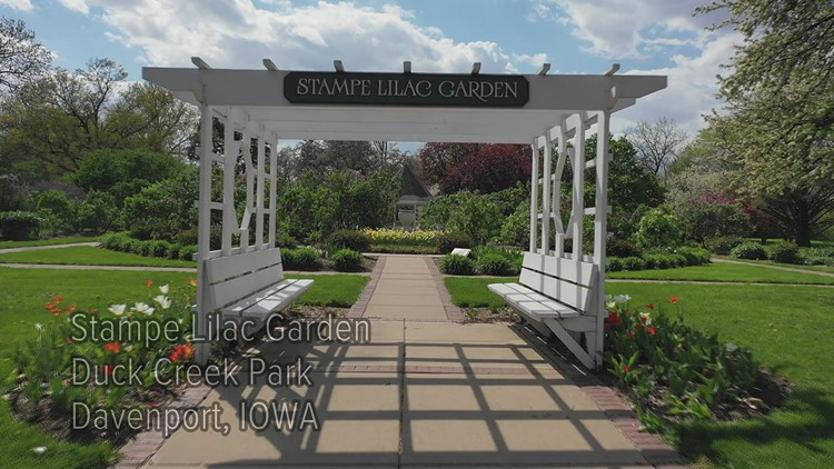 Watch: Lilac garden is in bloom at Duck Creek Park in Davenport