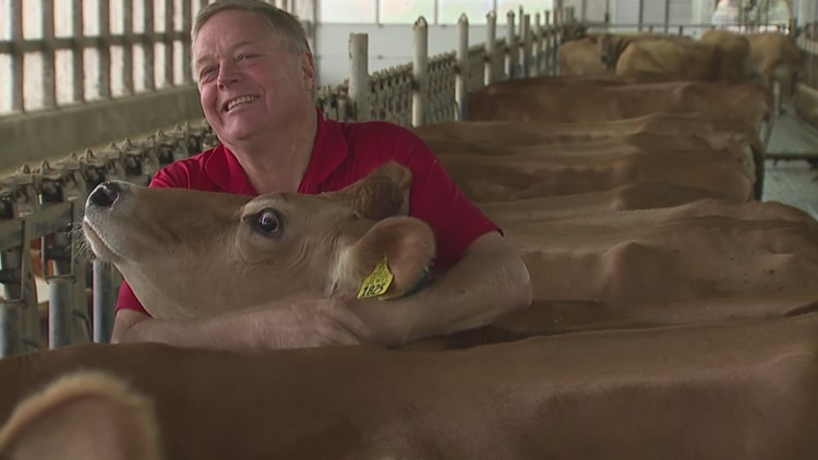 Cow hugging wellness trend spreads across the nation