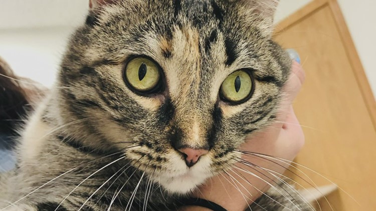 Our Pet of the Week From the Quad City Animal Welfare Center