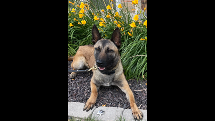 Galesburg Police K9 gets body armor donation
